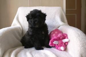 Lisa als Pup