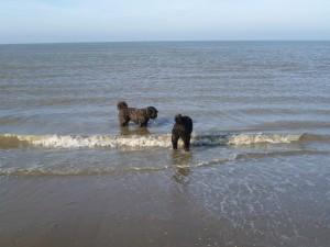 Layla met Casanova bij Katwijk in de zee